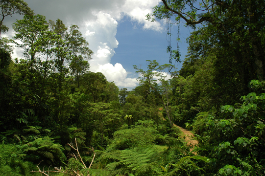 Waivundawa Forest